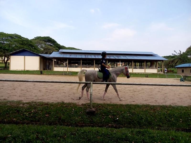 工大设有马场,以供修读马术管理学士课程的学生使用。此处,也在其余时间开放给公众骑马。