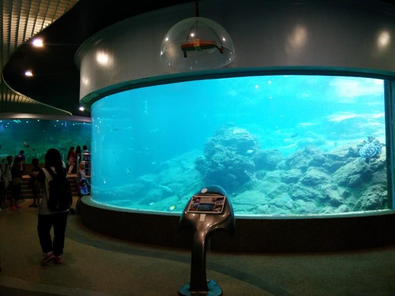 在全马大学当中,沙大是唯一有设立水族馆的大学,这也成了沙大最特别之处。平日大马公民可以RM10购票入场参观,而非大马公民的入场票价则是RM20,至于沙大生呢,享有免费入场的优待哟!