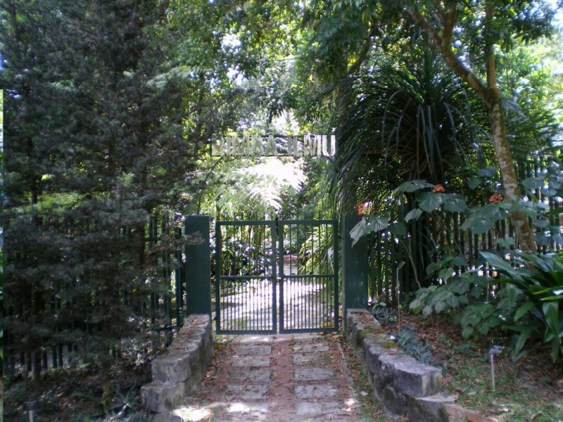 知识之林(Rimba Ilmu Botanical Garden)为马大校园内与吉隆坡市内少有的绿地之一。此热带植物园里边遍布许多马来西亚和印度尼西亚地区的植物,绝对是爱好大自然者必到之地。校外人士只需缴上五令吉即可入内参观。智慧之林也有进行研究与教育服务,甚至设有植物标本馆,凡有兴趣者可从中获得有关森林与生态研究的知识。