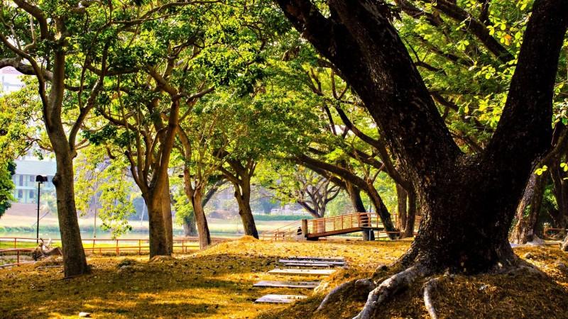"""理大总校以种植多样化的花木,而享有""""亚洲的花园大学(The University in a Garden)""""之美誉。学生置身其中,犹如在花园上课一般。理科总校也是一所研究全球生态系统的高等教育学府,故而秉持着平衡生态环境的理念建校。"""